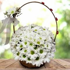 Sepette Beyaz Papatya