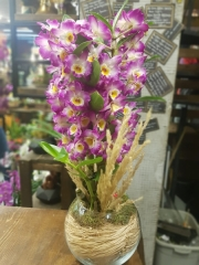 Orkide 08