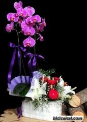 Orkide 06